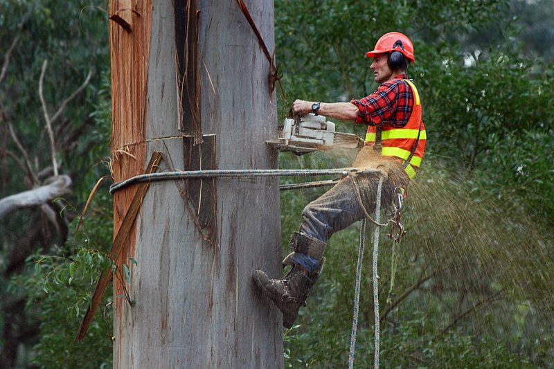A & M Tree Care